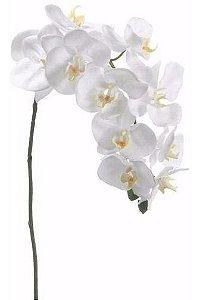 Galho Orquídea