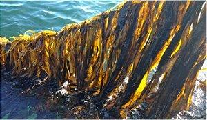 Adubo de Alga Marinha, Acadian 1L
