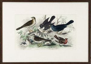 Pássaros V