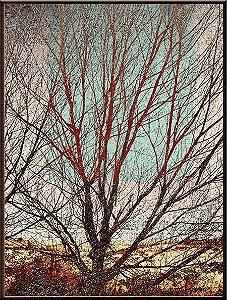 Árvore III