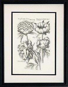 Flores VI