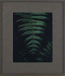 Planta I