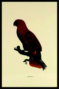 Pássaro VI