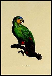 Pássaro VIII