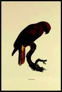 Pássaro VII