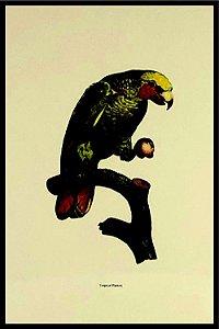 Pássaro X