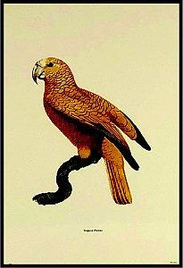 Pássaro XI