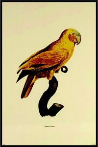 Pássaro XII