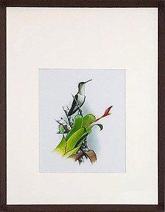 Beija-flor e Bromélia