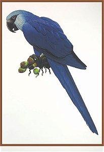 Pássaro XIII