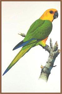 Pássaro XIV