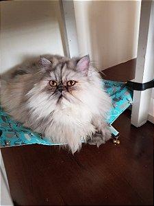 Rede Cat