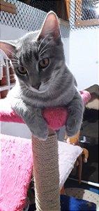 Kit alimentação gato Framboesa