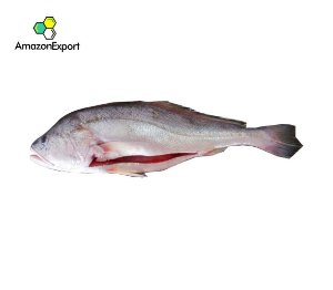 PESCADA BRANCA (Plagioscion squamosissimus) -  Amazon Export