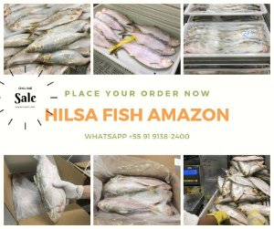 HILSA (Sarda sarda) -Amazon Export