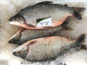 Rohu Whole Round Fish