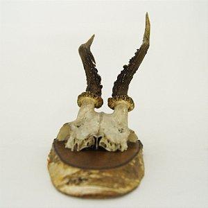 Decoração de Parede Crânio de Cervo Pequeno