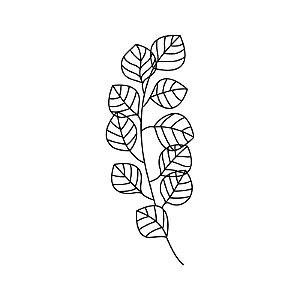 Decorativo de parede Eucalipto