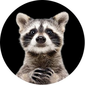 Capa Personalizada para Estepe Ecosport Crossfox Raccoon