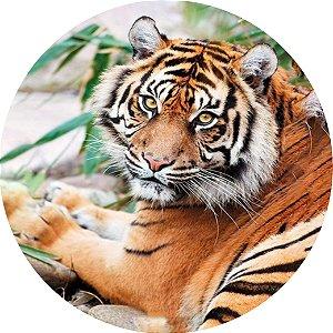 Capa para estepe Ecosport Crossfox + Cabo + Cadeado Tigre