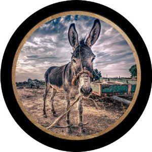 Capa Personalizada para Estepe Ecosport Crossfox Jegue Jumento