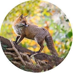 Capa para Estepe Pneu Personalizada Especial Crossfox Fox Raposa 11