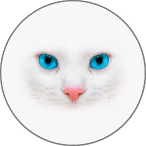 Capa para estepe Ecosport Crossfox + Cabo + Cadeado Felino Gato Branco