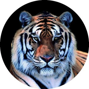 Capa Personalizada para Estepe Ecosport Crossfox + Cabo + Cadeado Tigre