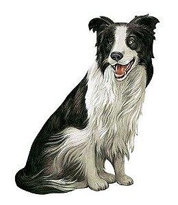 APM8-653 - Aplique Litoarte Em Papel E MDF - Cachorro Border Collie