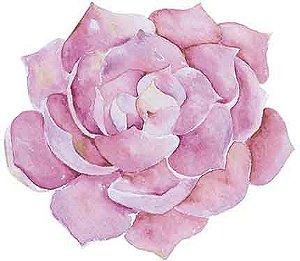 APM8-834 - Aplique Litoarte Em Papel E MDF - Suculenta Rosa