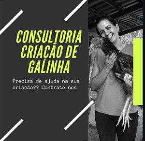 CONSULTORIA CRIAÇÃO DE GALINHA