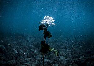 Flor imersa no mar