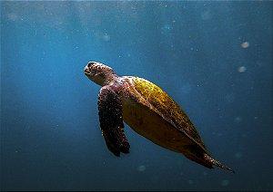 Tartaruga imersa no mar