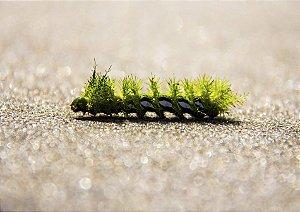 Lagarta verde na areia