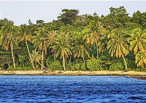 Coqueiros e mar em Mentawai