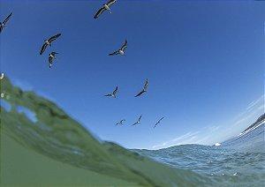 Aves em Pavones - Costa Rica