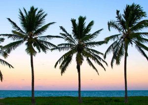 Sunset Colors and Coconut Trees