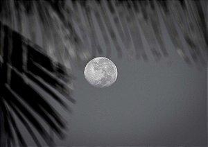 Lua com coqueiro de manhã