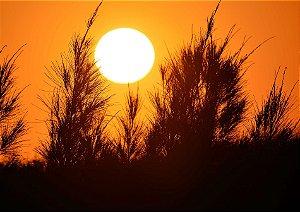 Pôr do sol atrás dos pinheiros