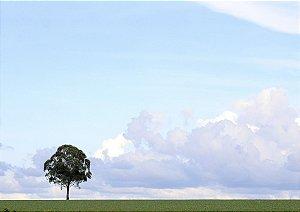 Árvores Solitárias na Chapada dos Veadeiros