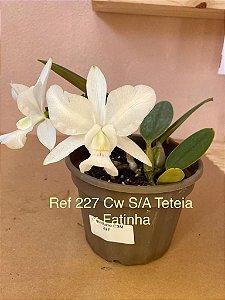 Cattleya S/A Teteia x Fatinha