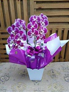 Orquídea Phalaenopsis Cascata 2 hastes (pote 15) embalagem luxo