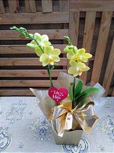 Orquídea Phalaenopsis mini 2 hastes (pote 09) embalagem luxo