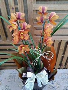 Orquídea Cymbidium 2 hastes (pote 15) embalagem luxo