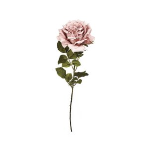 Haste de Rosa - Rosa Outono