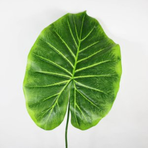 Folha de Inhame - 37cm