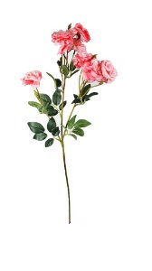 Haste de Rosa - Rosa