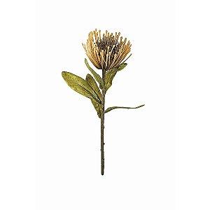 Haste de Protea - Bege