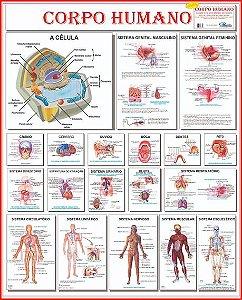 Mapa Anatomia Do Corpo Humano 120X90Cm Multimapas