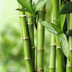 6266 - Essência Bamboo MM 100ml